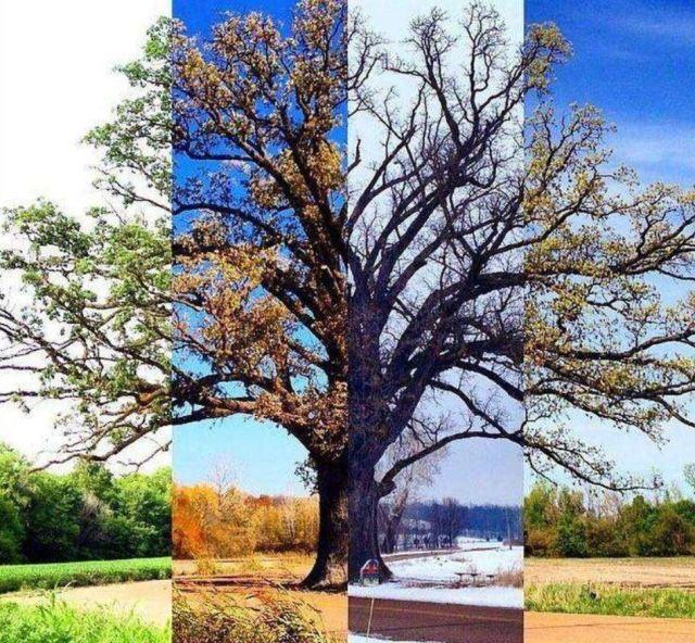 4-seizoenen[1]